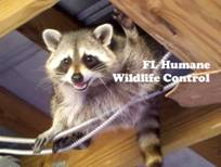 Credit 411 Raccoon Solutions